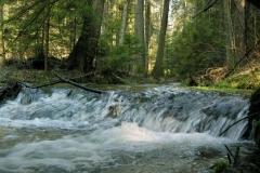 rzeka-jelen-i-wodospad-stokrotka_9